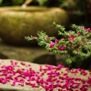 穏やかな日に、春の御霊神大祭が仕えられました。境内にも春の息吹がきこえます。